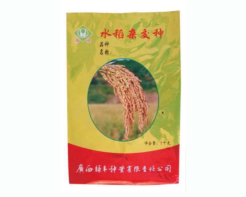 水稻杂交种